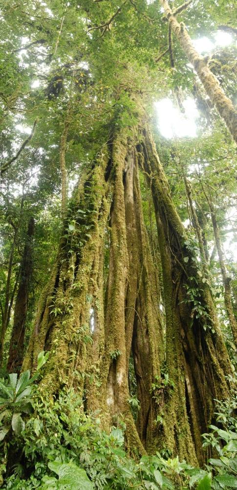 tree-panoS