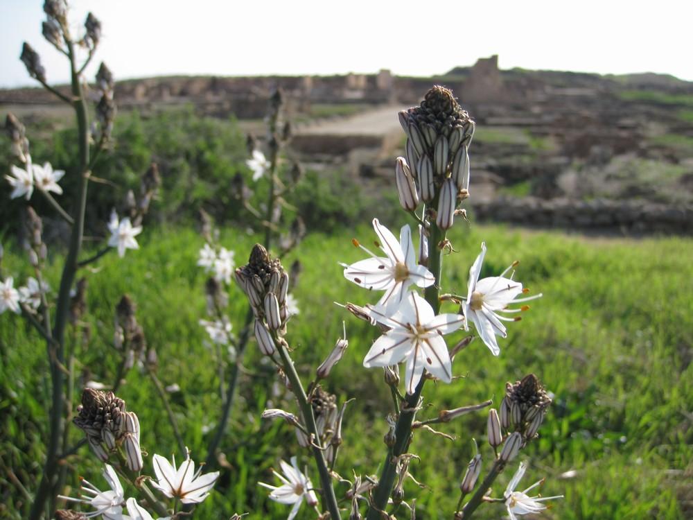 Paphos - House of Dionysus